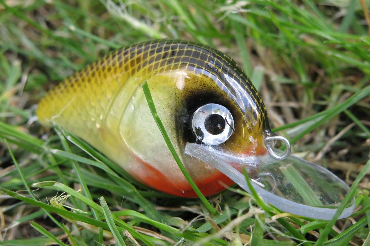 Baryła - wobler szczupakowy, pływający