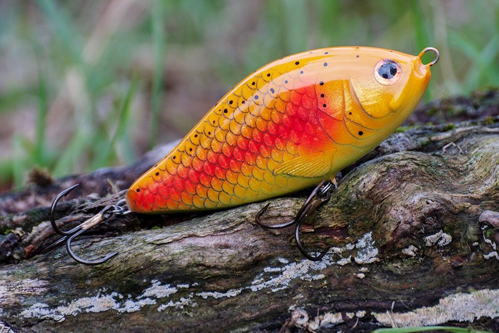gaspar orange trout